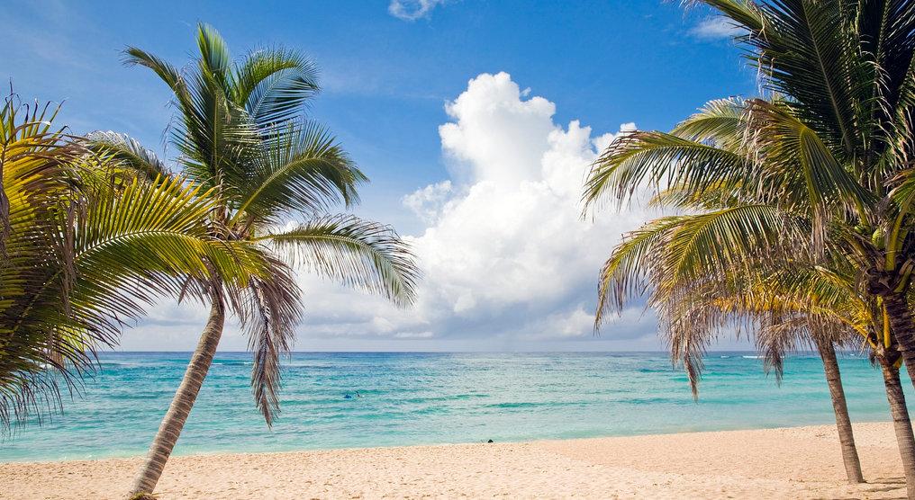 Caribien-palmer