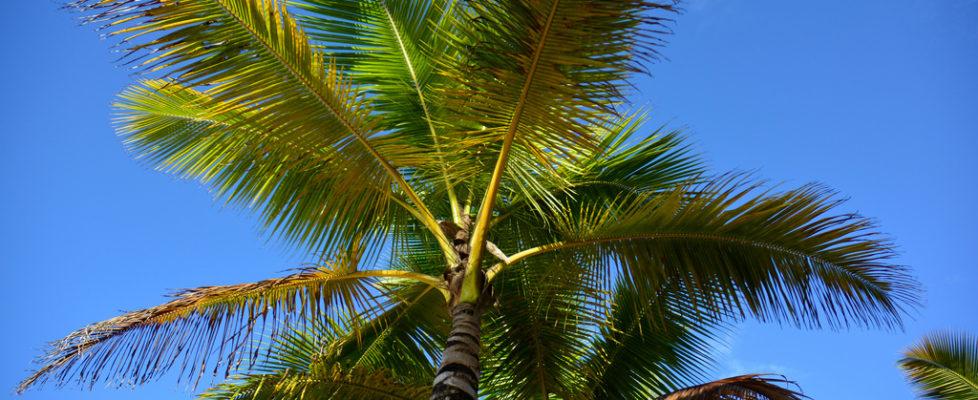 Caribien