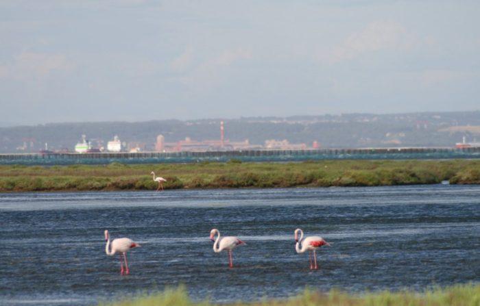 Trusler og flamingoer