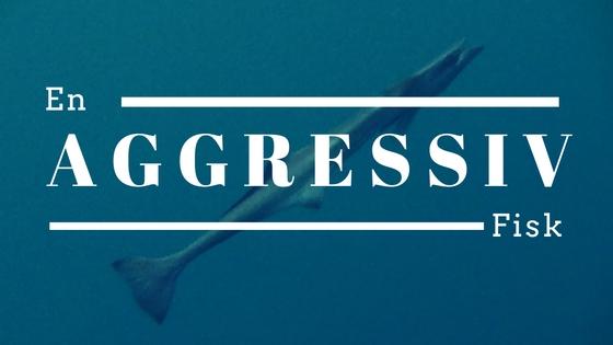 En aggressiv fisk 2